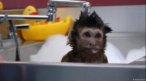 Πίθηκοι βοηθούν ανθρώπους με αναπηρίες